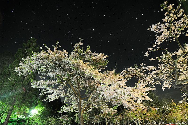 阿里山櫻花季3