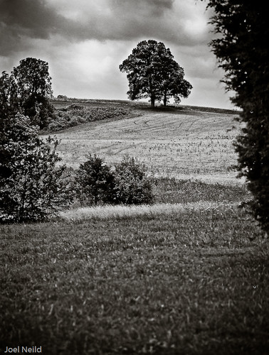 Field near Gethsemani