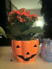 Pumpkin pot