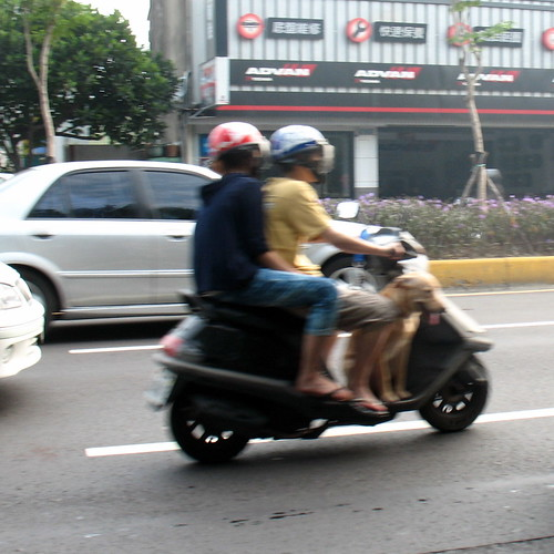 Dog riding on a moped with two people