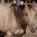 Paso Robles Horse Ranch 1