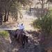 Paso Robles Horse Ranch 16