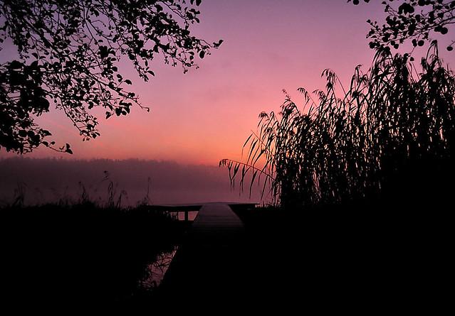 morning light thru fog