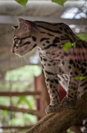 JaguarRescueCenter-11