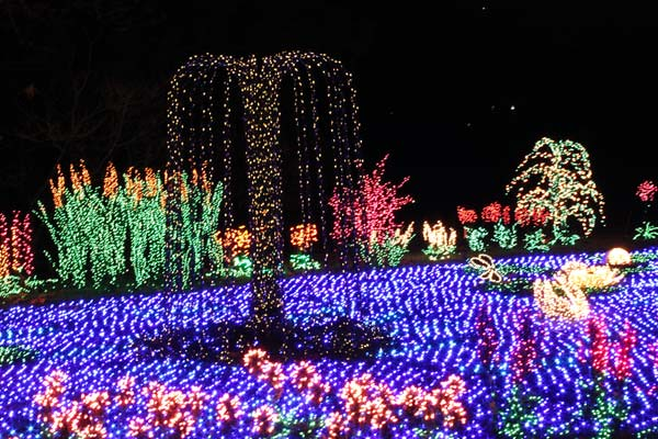 Garden D'lights Festival  Bellevue Events, Happenings