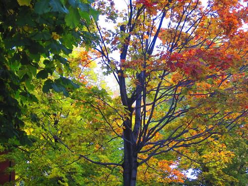 mas arboles en otoño