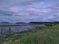 Samish Island at low tide