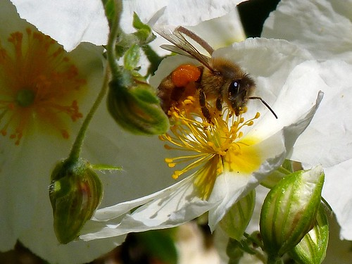 loaded for bee