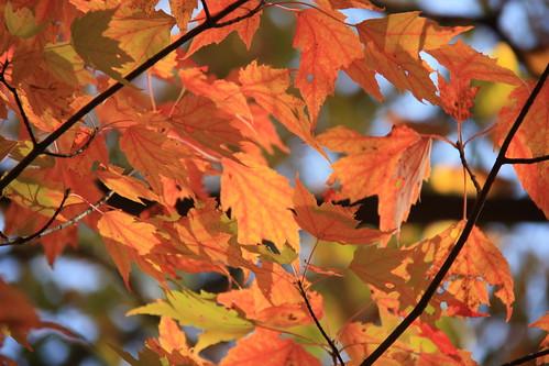 Leaves by aimeesblog