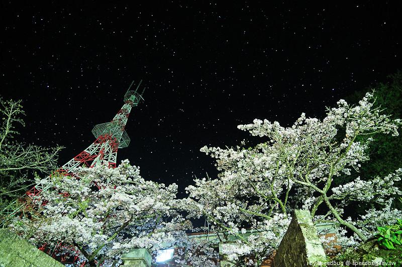 阿里山櫻花季8