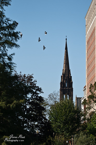 Birds soar near a Boston steeple.
