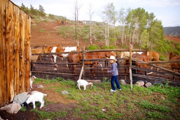 Black Mountain Colorado Dude Ranch girl horses fence