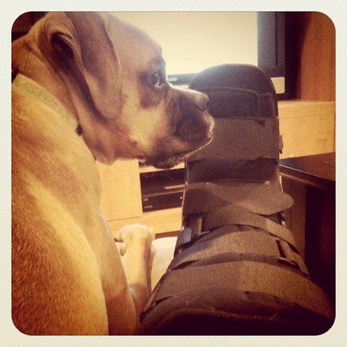 The Dog & The Boot #jadetheboxer