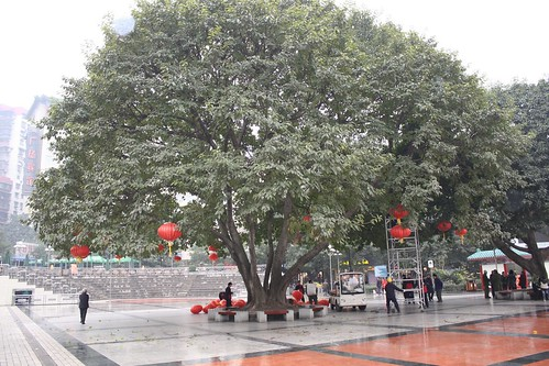 Chongqing Tree Economic Growth