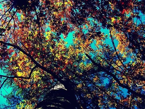 Trees by Boblikes54