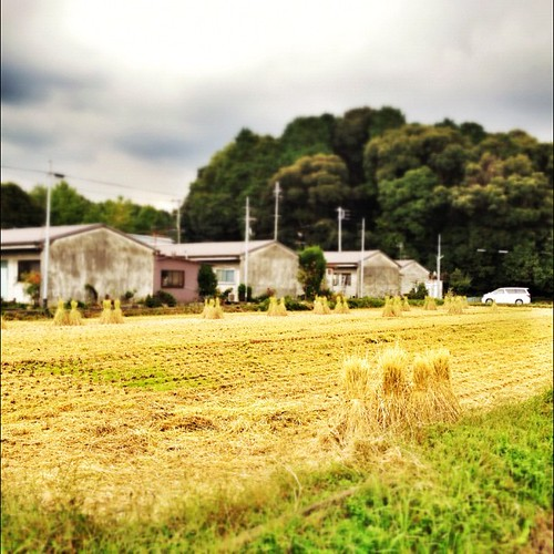 収穫の秋。  #autumn #iphonography #instagram #iphone4s