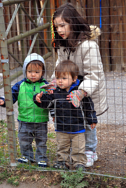 kids viewing goats