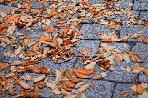Autumn power by stst31415