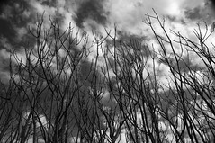 Naked trees by miguel_out, on Flickr