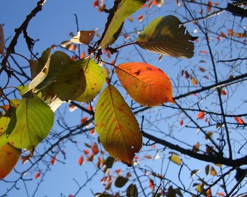 Herbst in Busan
