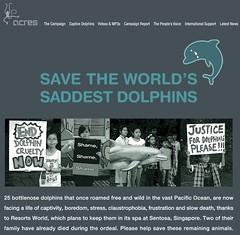 World's Saddest Dolphins