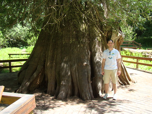 3000 years old, 18' across, 117' tall