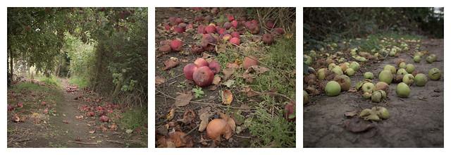 Apples #1-3