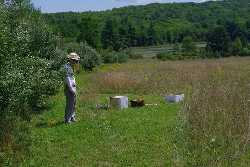 Nick and knocked over hive