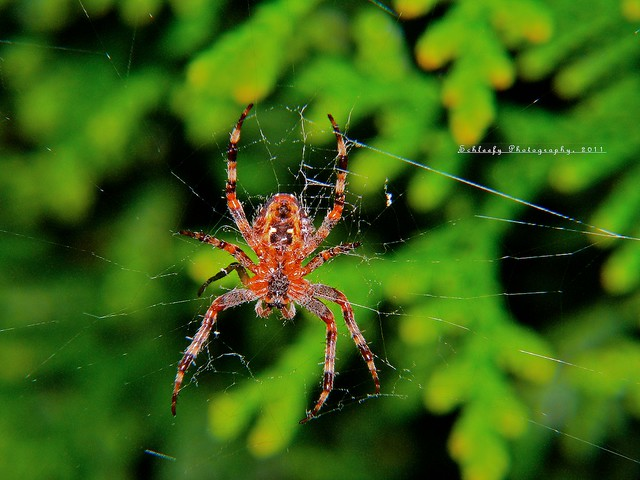 #237/365 New Spider in Town