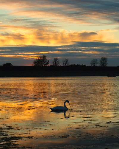 20110819-22_Sunset reflections + Swan_Rainbow Corner_Draycote Water by gary.hadden