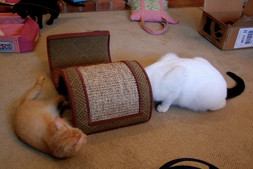 All Three Cats!