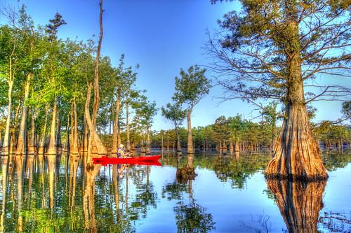 Franny by the Tupelo Gum trees