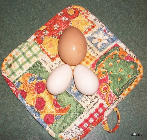 Eggs - look at the size difference