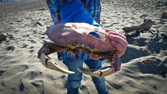 Noah Holding Crab Shell