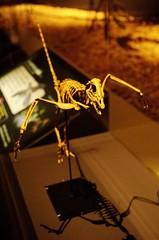 Archaeopteryx 始祖鳥
