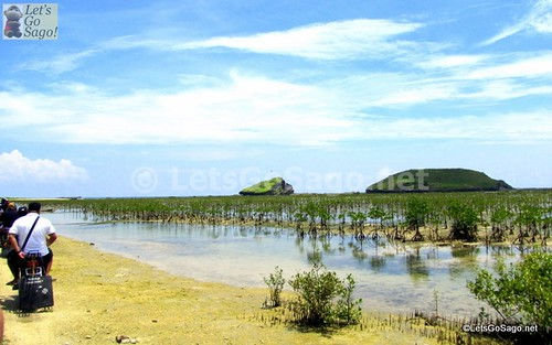 Mangroves at the foot of the Biri Rockk Formations