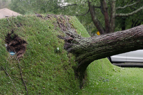 Tree Upended