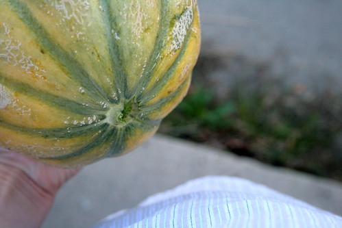 mystery melon: before