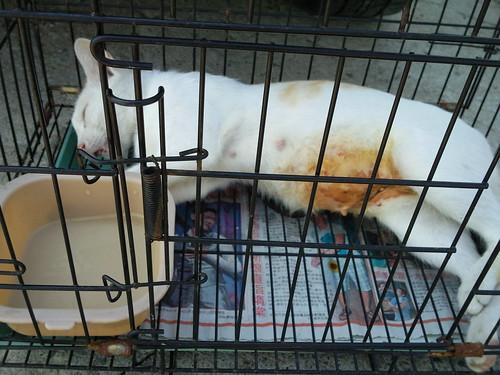 臺灣動物緊急救援小組 - 抓貓結紮希望大家可幫忙費用!