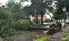 Storm damage in Centervale Park