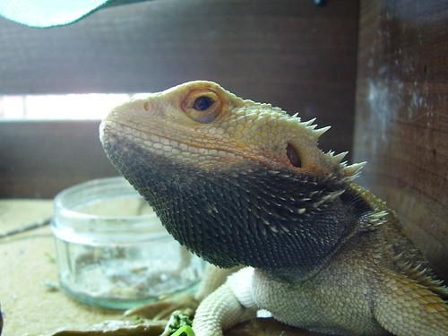 2011-09-05 Keiko 01