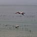 Birds Off the Shell Beach Coast 7