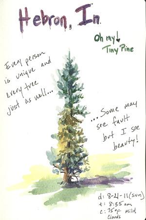 20110821_tiny_pine_sketch