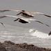 Birds Off the Shell Beach Coast 9