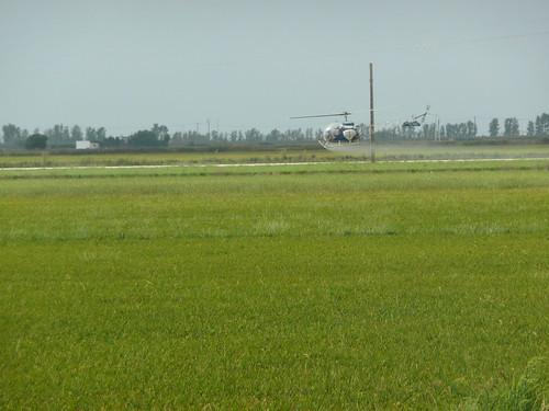 Fumigando el arrozal