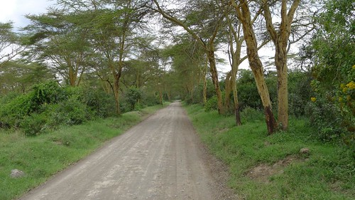 Driving through the Nakuru Park