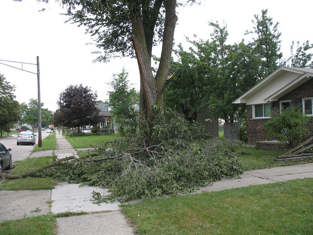 Tree damage, September 6, 2011