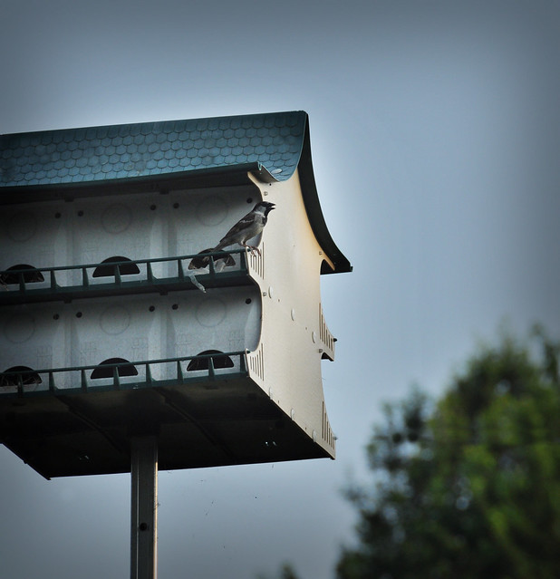 Martin Bird House