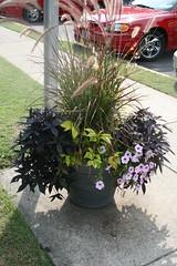 Pretty planter outside the inn