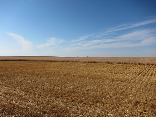 Cut field 3